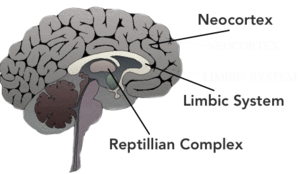 Image result for the three areas of the brain