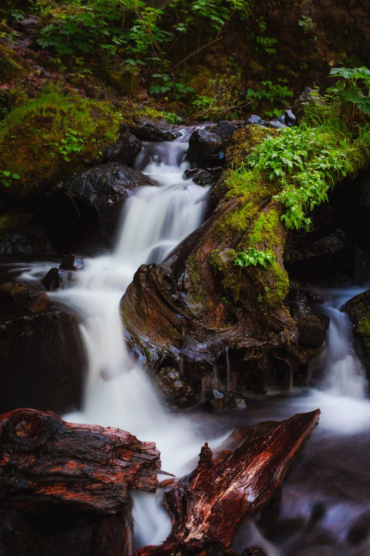 running-water-surrounded-of-trees-and-plants-710906